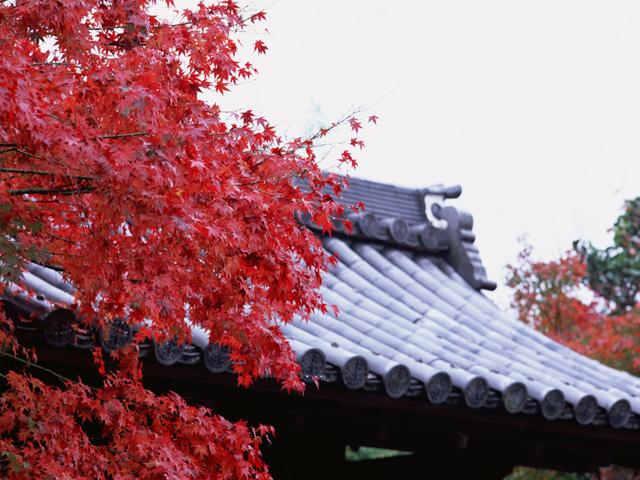 歌舞伎界の巨星二つ、中村勘三郎さんと市川團十郎さん